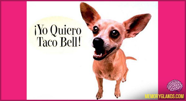 funny taco bell commercial dog