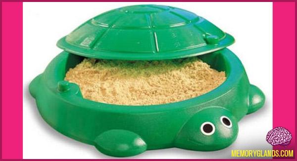 funny turtle sandbox photo